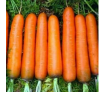 Wild Fresh Carrot In Stock