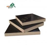 finger joint poplar core shuttering plywood price for dubai