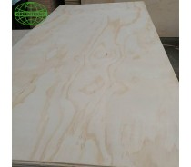 Pine faced plywood poplar sheet for Chile market