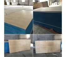 Pine faced  plywood poplar sheet for Mexico market