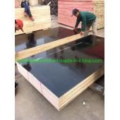 18mm Shutting Plywood Cheaper Price to Dubai